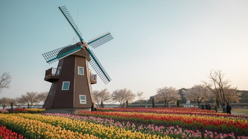 Holland, 5 dagar