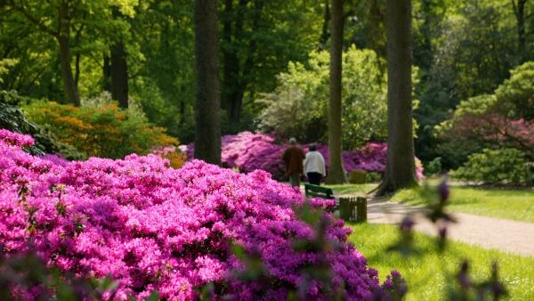 Tyska Trädgårdar, 4 dagar