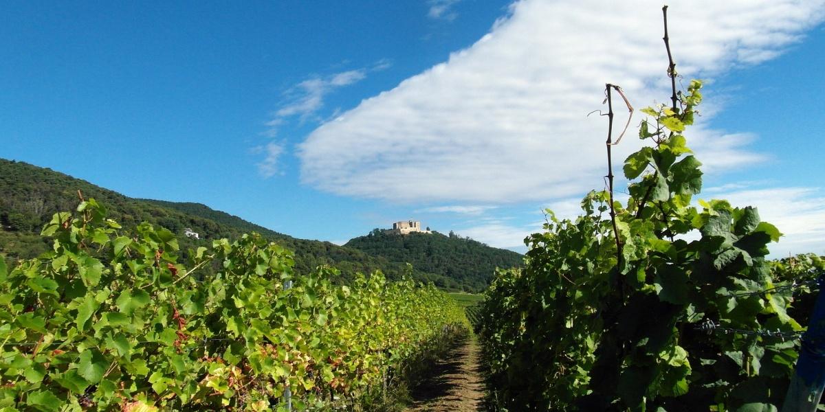 Tyska vinvagar